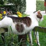 JUOKINGA: Iš kačių kasdienio gyvenimo