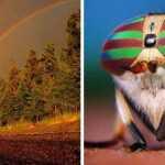 Gamtos vaizdai kurie privers Jus aiktelėti