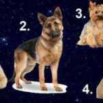 Išsirinkite šunį ir sužinokite, kuris vyras jums tinka idealiai