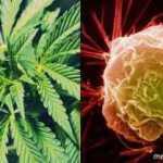 Marihuana stiprina imunitetą ir žudo vėžio ląsteles, nustatė vokiečių gydytojai!
