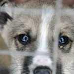 Ji užėjo į prieglaudą, kad išsirinktų sau šunį… Istorija paliečia iki sielos gelmių!