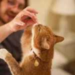 Kaip suprasti, ar katė myli savo šeimininką?