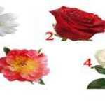 Pasirinkta gėlė atskleis jūsų temperamento paslaptį ir pateiks rekomendaciją, kuri jums tikrai tinka