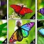 Jūsų pasirinktas drugelis atskleis jūsų asmenybę!