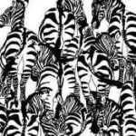 Tarp šių zebrų yra paslėptas barsukas ir dauguma žmonių negali jo rasti