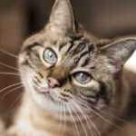Magiškos kačių spalvos: jos išduoda net jūsų likimą