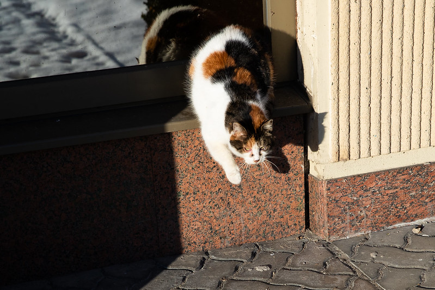 Seimo kanceliarijos nuotr. (aut. Olga Posaškova)